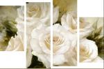 Розы 31/02