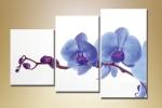 Орхидея 08-94