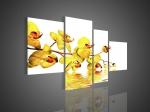Желтые орхидеи