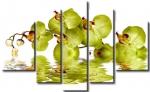 Зеленые орхидеи 99/11