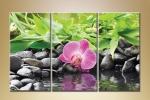 Орхидея на берегу 08-96