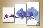 Голубые орхидеи 07/91